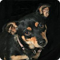 Adopt A Pet :: Luby Loo - Woonsocket, RI