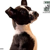 Adopt A Pet :: Grace - Phoenix, AZ