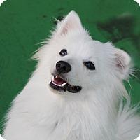 Adopt A Pet :: Sky - Fairfax, VA