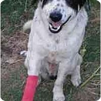 Adopt A Pet :: Hoppy - Floresville, TX