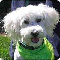 Adopt A Pet :: Da Vinci - La Costa, CA