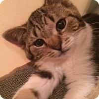 Adopt A Pet :: Bunny - Long Beach, NY