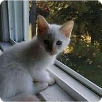 Adopt A Pet :: Noah - Proctor, MN