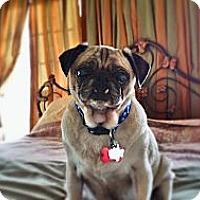 Adopt A Pet :: Ducky - Austin, TX