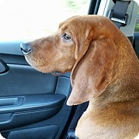 Adopt A Pet :: Union - Hazard, KY