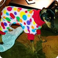 Adopt A Pet :: Colt - Kirkland, WA