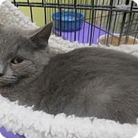 Adopt A Pet :: Shadow - Brockton, MA