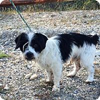 Adopt A Pet :: Lasso - Reno, NV