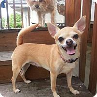 Adopt A Pet :: Tegan - Chicago, IL