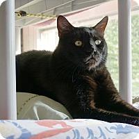 Adopt A Pet :: Terror 'Terry' - Mt Vernon, NY