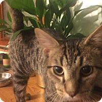 Adopt A Pet :: Loki (and Odin) - Trenton, NJ