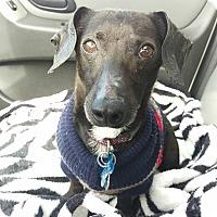 Adopt A Pet :: Ike - Ogden, UT