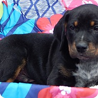 Adopt A Pet :: Raleigh (8 lb) - SUSSEX, NJ