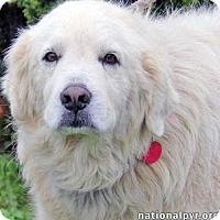 Adopt A Pet :: Iris - new! - Beacon, NY