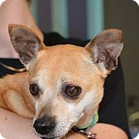 Adopt A Pet :: Bonita - Lafayette, IN