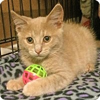 Adopt A Pet :: Carter - East Brunswick, NJ
