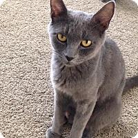 Adopt A Pet :: Ramona - Temecula, CA