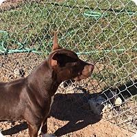 Adopt A Pet :: Bryce - Cedaredge, CO