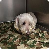 Adopt A Pet :: Rosie - Summerville, SC