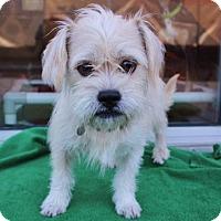 Adopt A Pet :: Baton Bob - Atlanta, GA