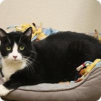 Adopt A Pet :: Hiroshi - North Hollywood, CA