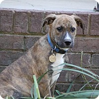 Adopt A Pet :: Trooper - Chattanooga, TN