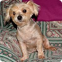 Adopt A Pet :: Twinkle - Granbury, TX