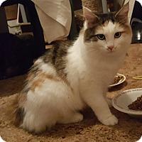 Adopt A Pet :: Maizie - Irwin, PA