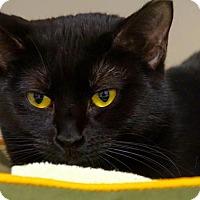 Adopt A Pet :: Bandit - Scituate, MA
