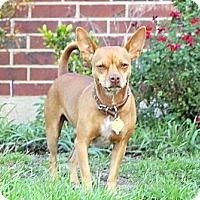 Adopt A Pet :: Dixon - Kempner, TX