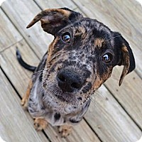 Adopt A Pet :: *Cabo - PENDING - Westport, CT