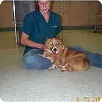 Adopt A Pet :: Albus - Inola, OK
