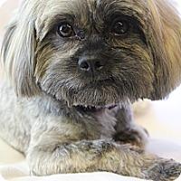 Adopt A Pet :: Jasper - Hamburg, PA