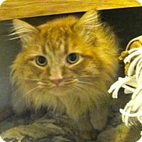 Adopt A Pet :: Murphy - Davis, CA