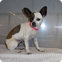 Adopt A Pet :: Polly - Mesa, AZ