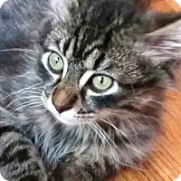 Adopt A Pet :: Rollins - Davis, CA