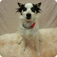 Adopt A Pet :: JUNA - New Cumberland, WV