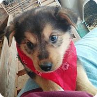 Adopt A Pet :: Venus - Rochester, NY