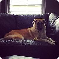 Adopt A Pet :: LUCKY - McKinney, TX