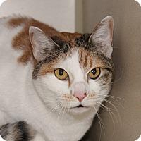 Adopt A Pet :: Neko - Grinnell, IA
