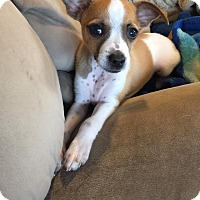 Adopt A Pet :: Ryo - Indianapolis, IN