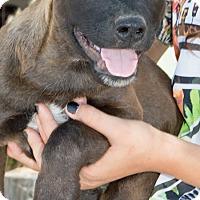 Adopt A Pet :: Mogli - Patterson, CA