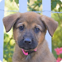 Adopt A Pet :: Olivia von Perth - Thousand Oaks, CA