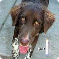 Adopt A Pet :: Jordy - Lindsay, CA