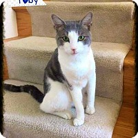 Adopt A Pet :: Toby (COURTESY POST) - Baltimore, MD