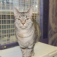 Adopt A Pet :: Queen of the Cruel - Holden, MO