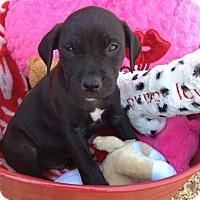 Adopt A Pet :: MARLEY-APPLICATION PENDING - Cranston, RI