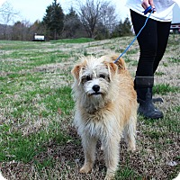 Adopt A Pet :: Barbie~adopted! - Glastonbury, CT