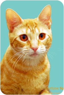 Domestic Shorthair Cat for adoption in Encinitas, California - Alice
