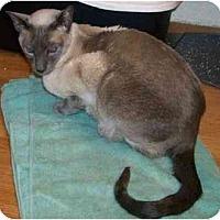 Adopt A Pet :: Simon - Davis, CA